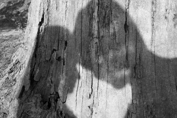 Shadow of a man and woman's heads tilted together, creating a heart.