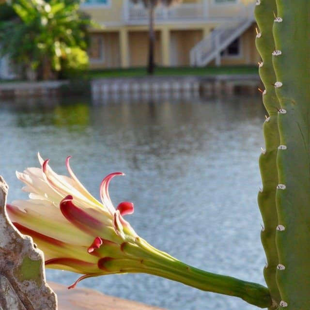 Cactus flower in nature - family travel